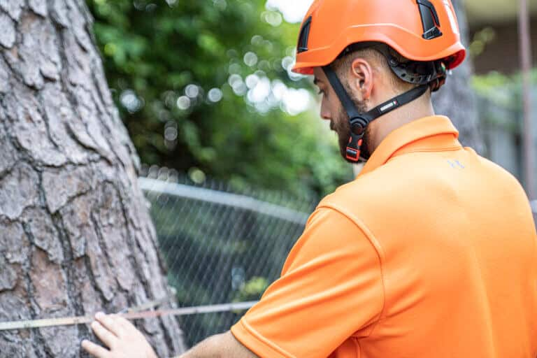 Tree Risk Assessment Marietta GA