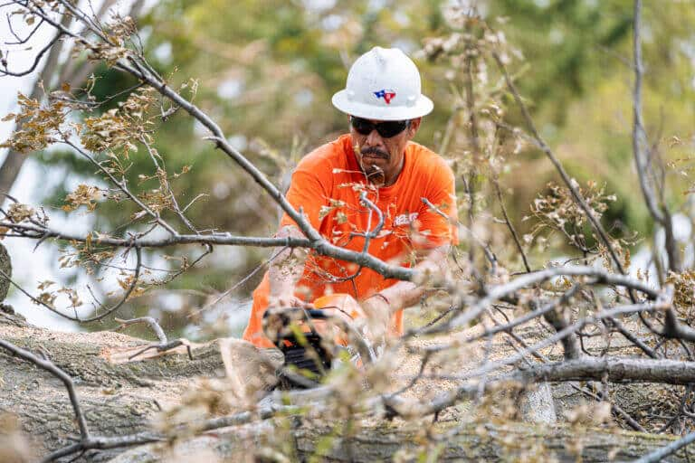 Commercial Tree Removal Services Marietta GA