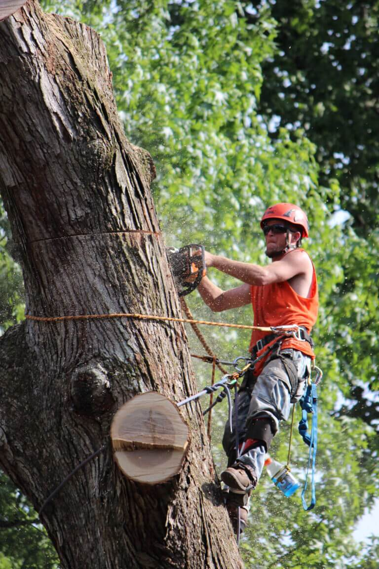 Tree Trimming Services Marietta GA