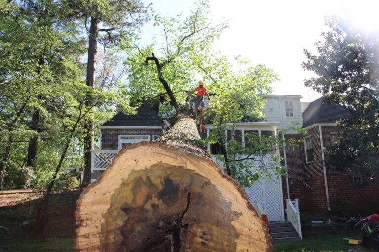 Emergency Tree Removal Services Atlanta GA