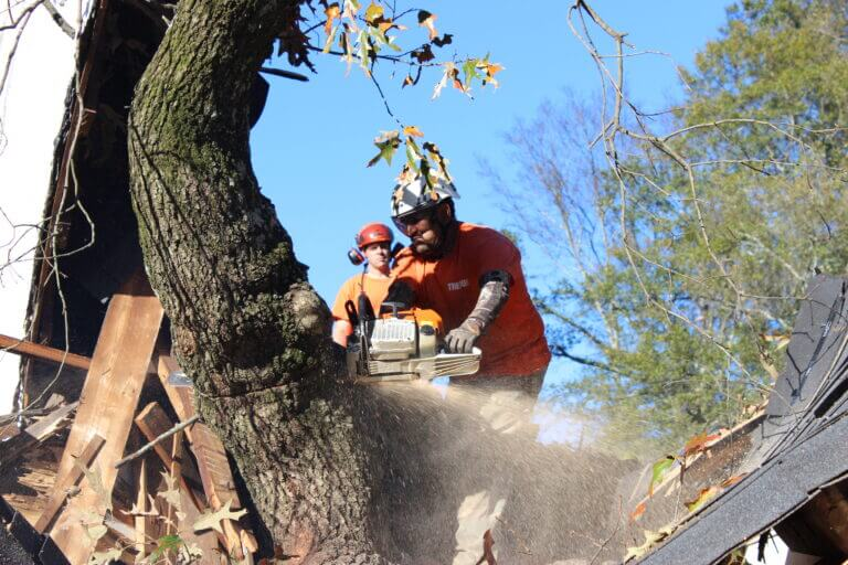 Emergency Tree Service Atlanta GA
